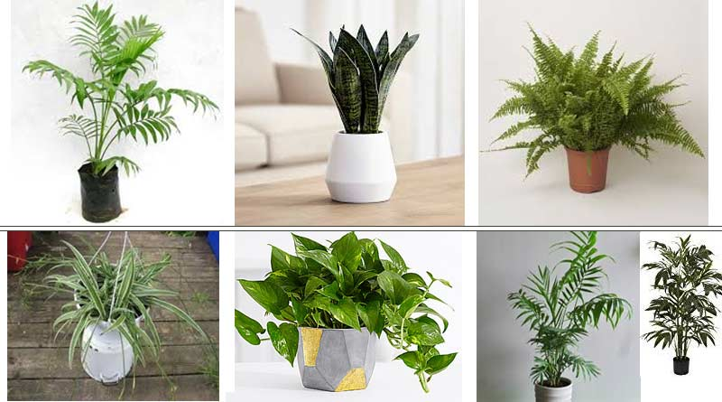 10 Best Air Cleaning Houseplants
