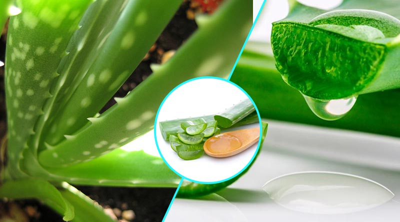 first aid benefits of aloe vera