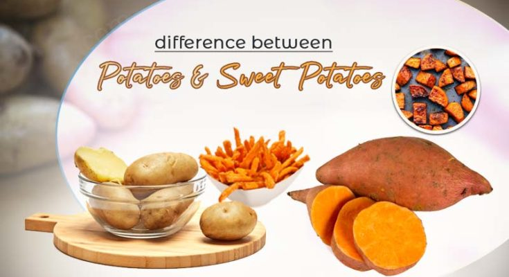 difference between potatoes and sweet potatoes