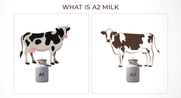 what is a2 milk