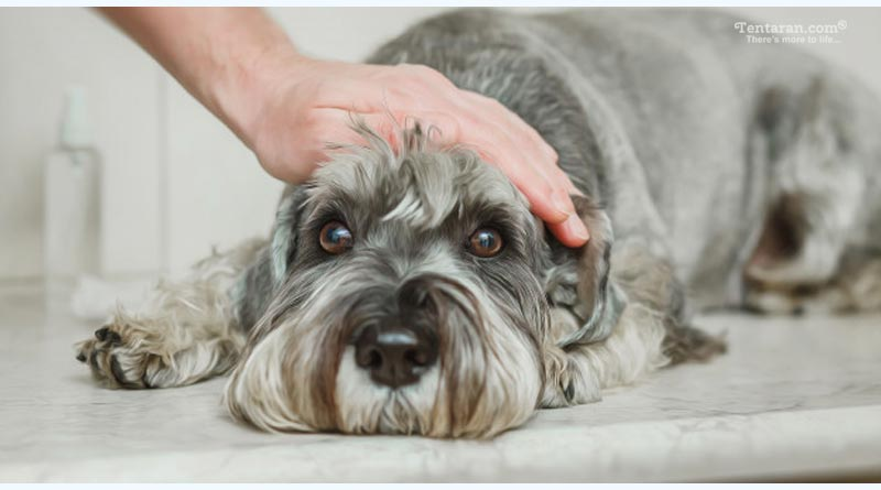 symptoms that your dog is sick