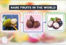 rare fruits in the world