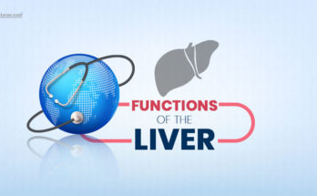 functions of the liver