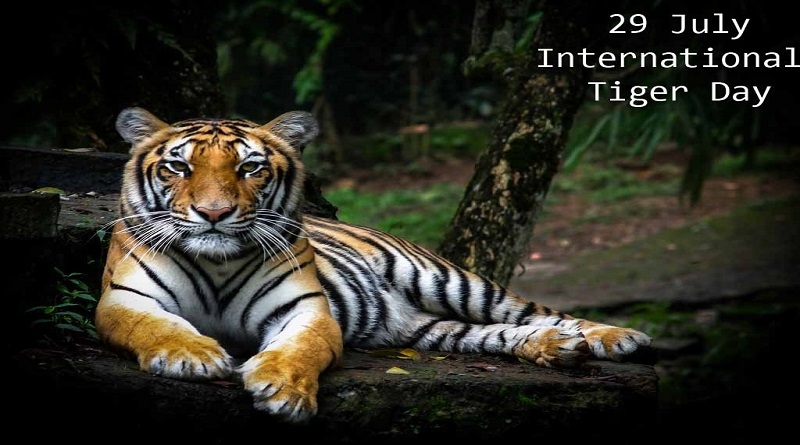 international tiger day 2019