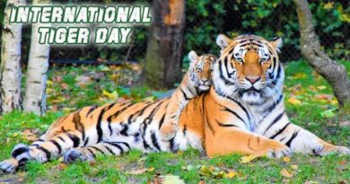 International Tiger Day 2021: International Tiger Day Significance
