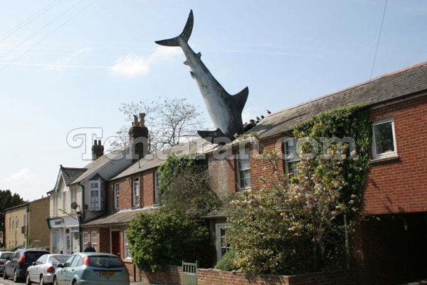 the headington shark england
