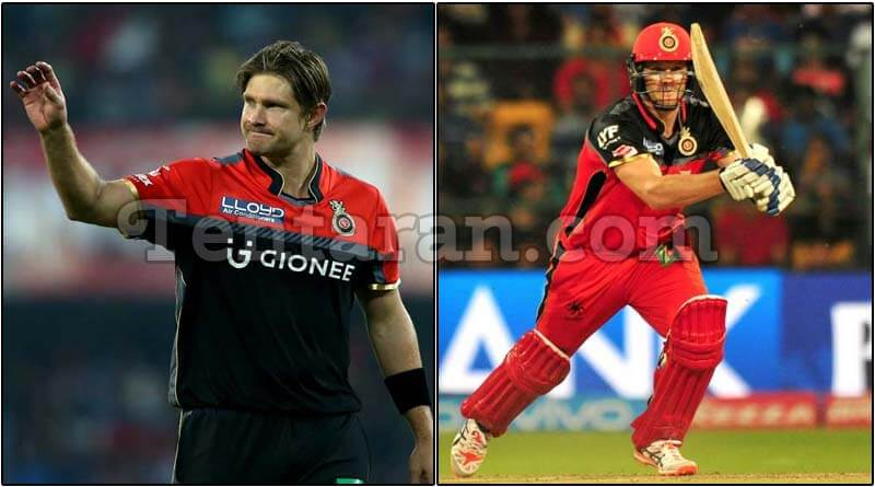 IPL – Royal Challengers Bangalore Captain Shane Watson Blames himself For Loss