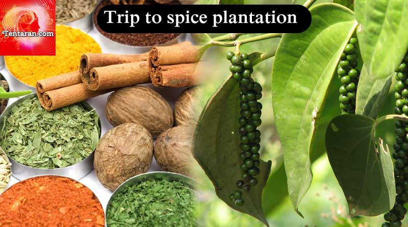 Trip to spice plantations