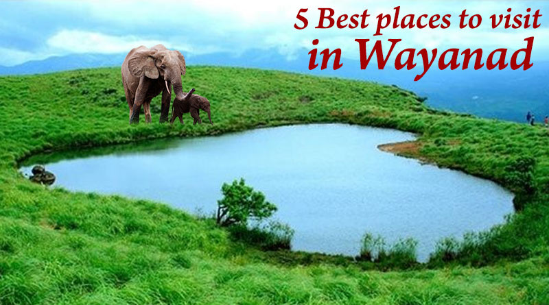 Best five places to visit in Wayanad