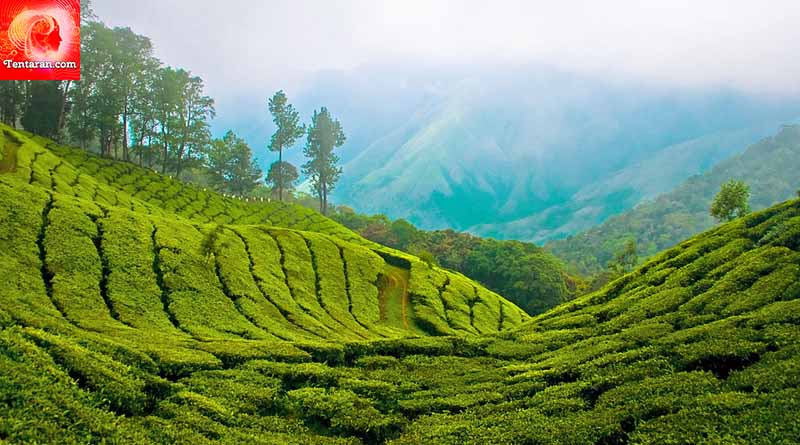 ● Stay at a hill station in Munnar