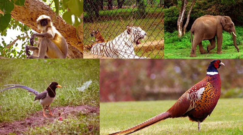 Kalatop Wildlife sanctuary