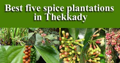 best spice plantations in Thekkady Kerala
