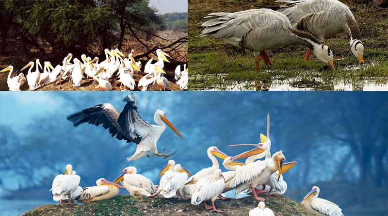 Bharatpur Bird Sanctuary Rajasthan
