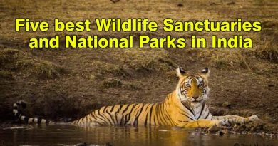 Five Best Wildlife Sanctuaries and National Parks in India