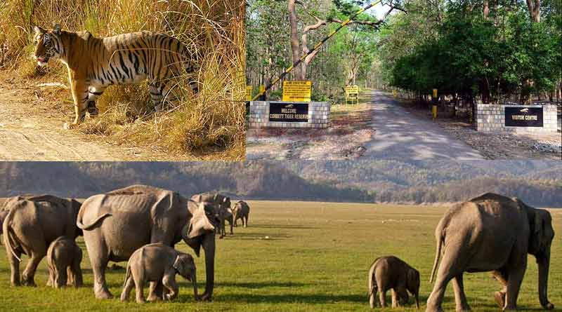 Jim Corbett National Park Uttarakhand