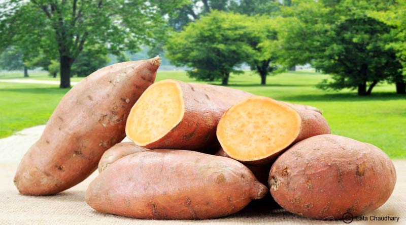 sweet potato reduces weight