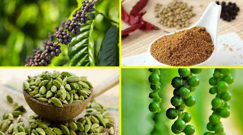 coorg product