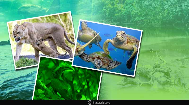 wildlife sanctuaries in Tamil Nadu