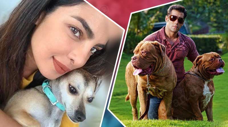Bollywood celebrities and their adorable pets