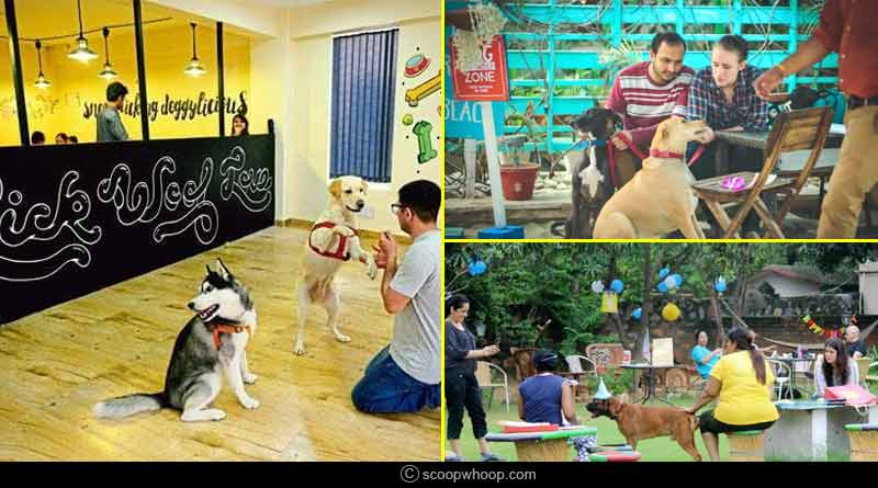 Pet Friendly cafes in Delhi