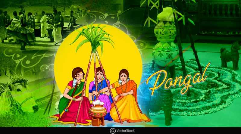 significance of the festival of Pongal