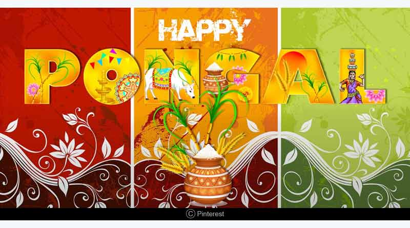 the festival of Pongal