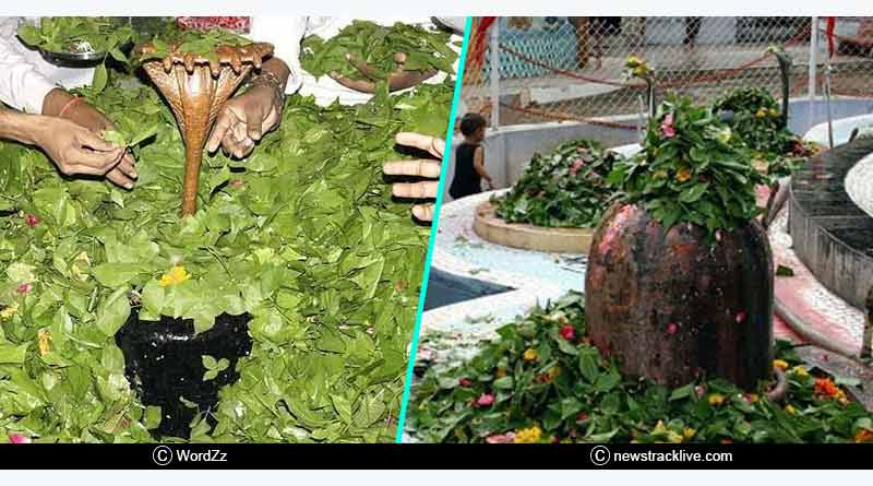 why is bilva leaf offered to Lord Shiva