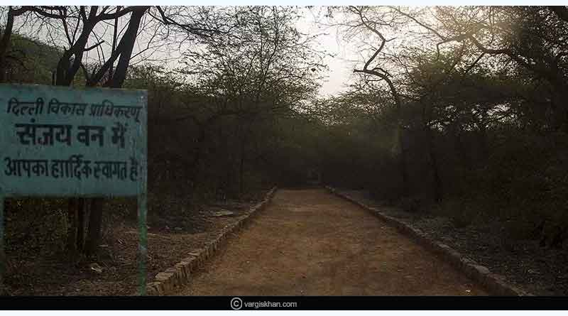 Sanjay Van, the Eerie Woods