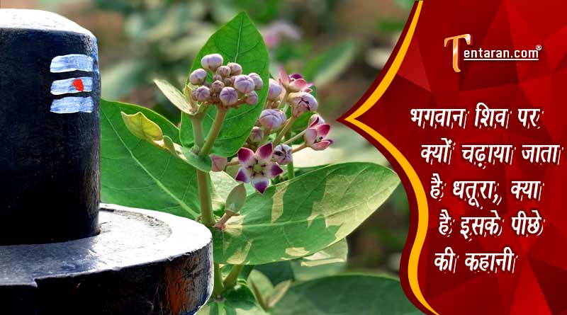 why lord shiva is offered datura hindi