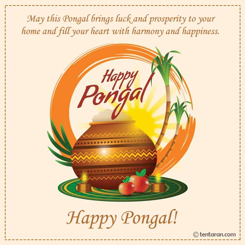 happy pongal image2