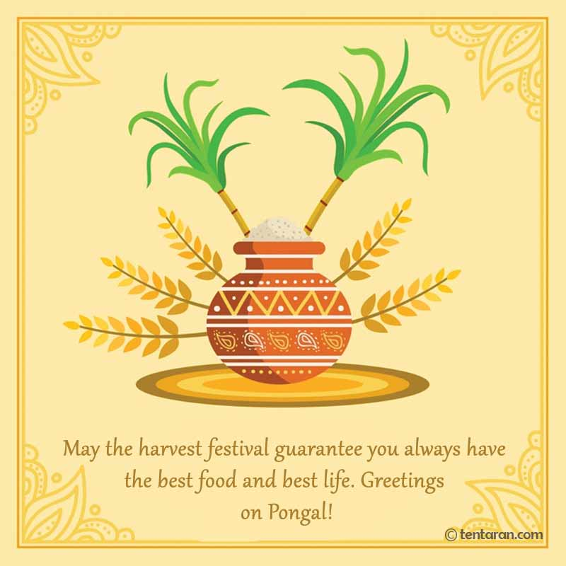 happy pongal image4