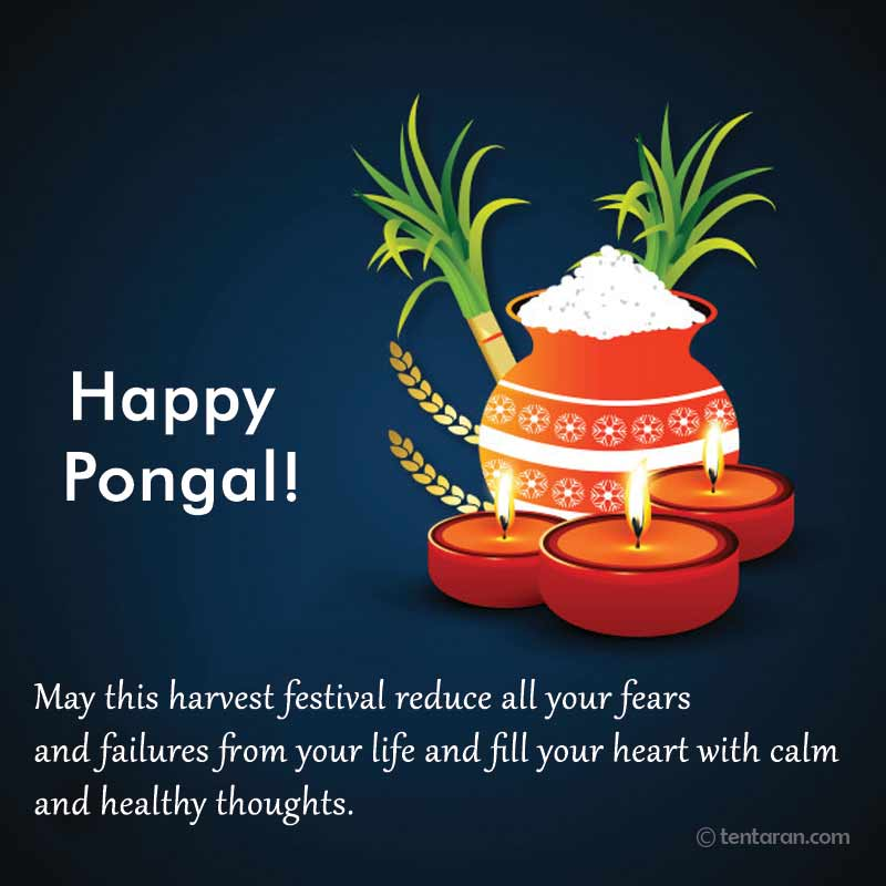 happy pongal image6