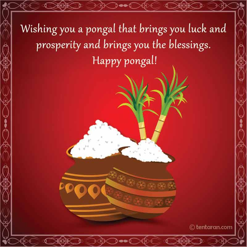 happy pongal image8