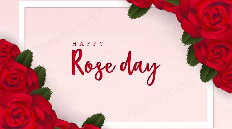 happy rose day quotes love wishes whatsapp status