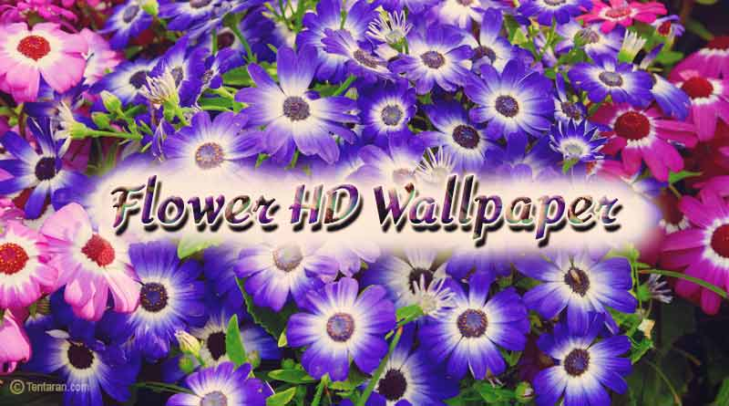 Beautiful Flowers Images Free Download Flower Wallpaper Images