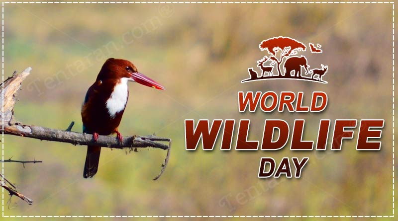 world wildlife day quotes images