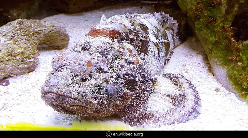 interesting facts about stonefish hindi