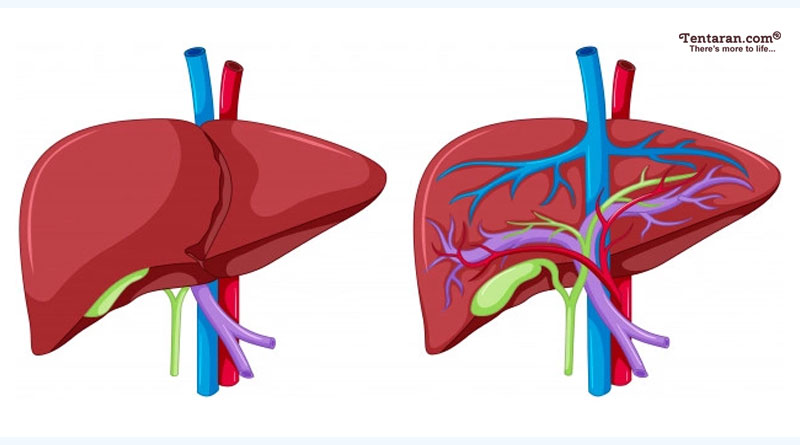 beneficial in liver problems