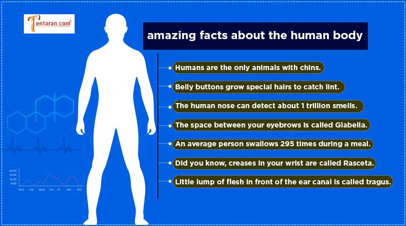did you know facts about human body
