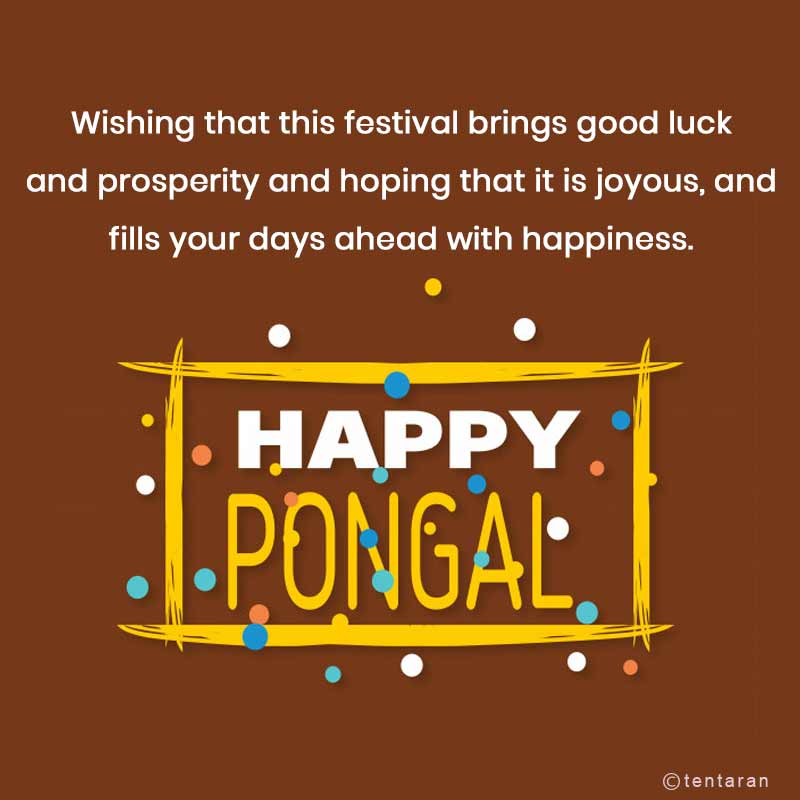 happy pongal images11