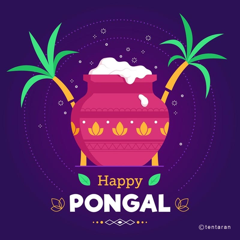 happy pongal images12