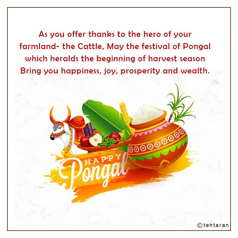 happy pongal images13
