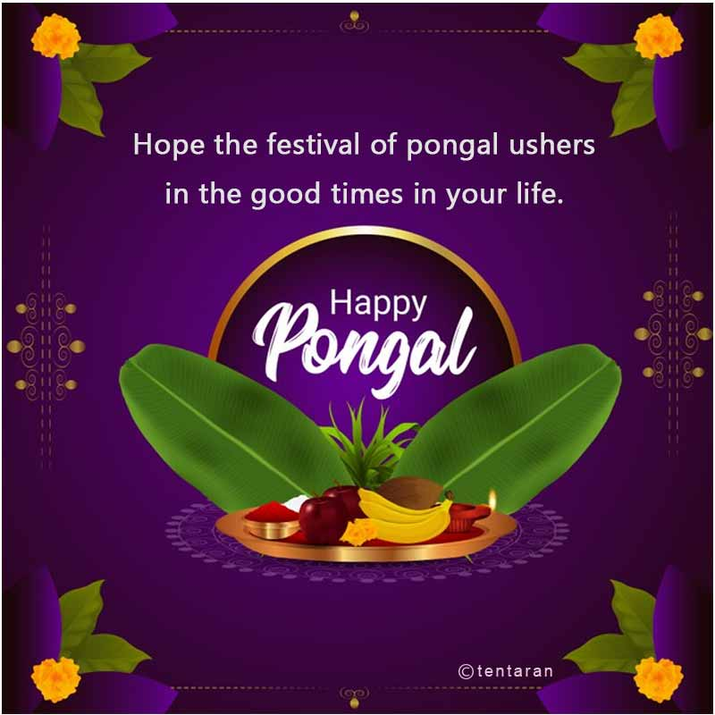 happy pongal images3