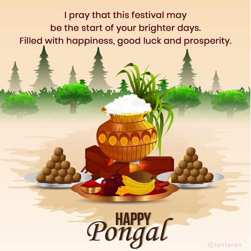 happy pongal images9