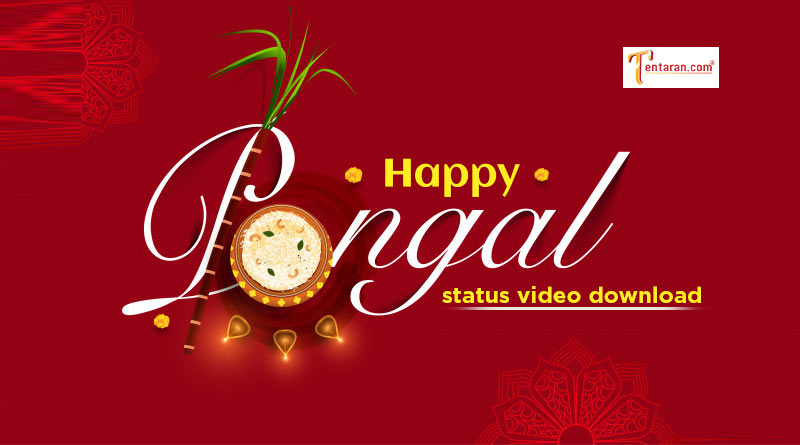 happy pongal whatsapp status video