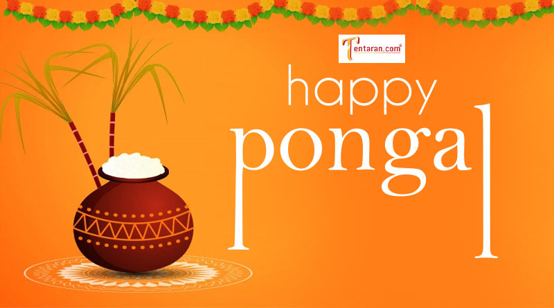 happy pongal wishes quotes greetings images