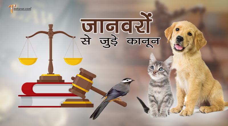 pet laws in india in hindi
